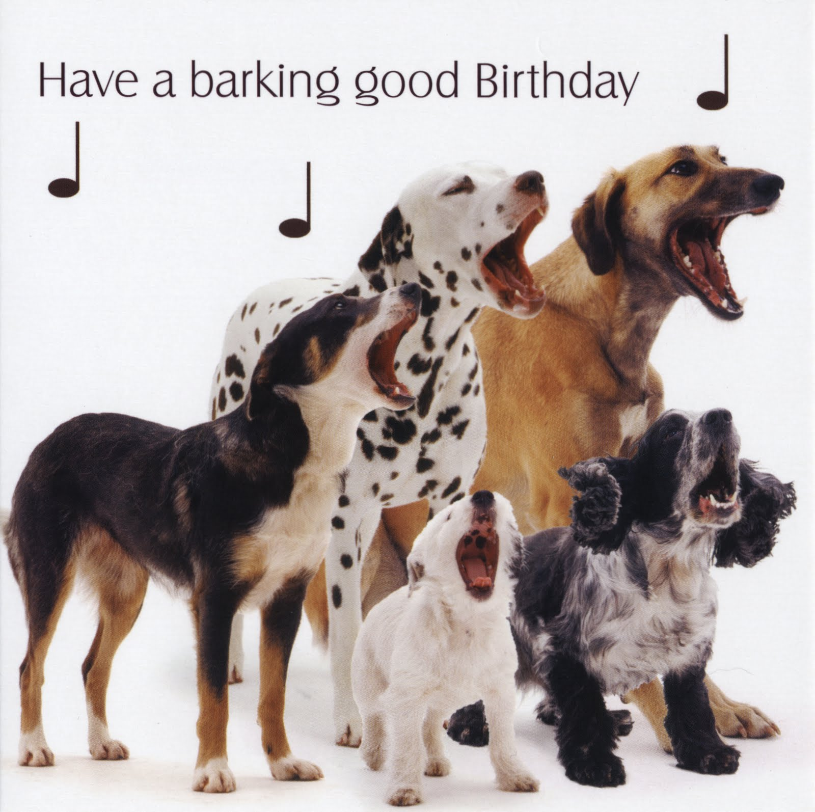 BarkingGoodBirthday